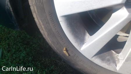 гусеница на покрышке